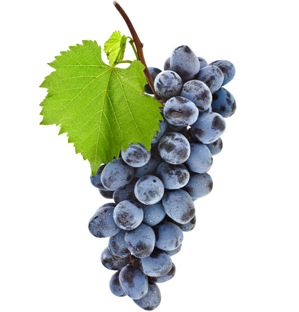 bunch of ripe dark grapes and green leaves closeup on white background photo