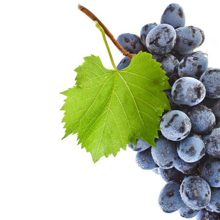 bunch up: bunch of ripe dark grapes and green leaves closeup on white background