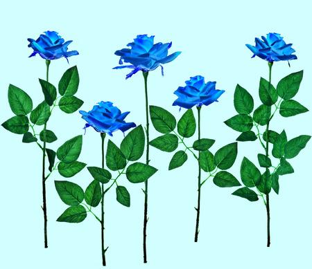 aqua background: Conjunto de la colecci�n de la hermosa rosa azul aislado en el fondo de la aguamarina Foto de archivo