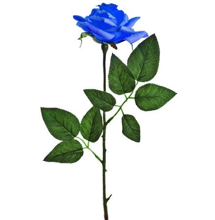 beautiful blue rose isolated on white background Stock Photo