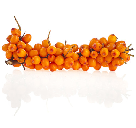 branch ripen sea buckthorn berries (Hippophae rhamnoides) close up isolated on white background photo