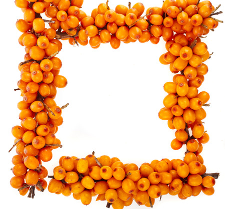buckthorn: Frame of Sea buckthorn branch with berries isolated on the white background Stock Photo