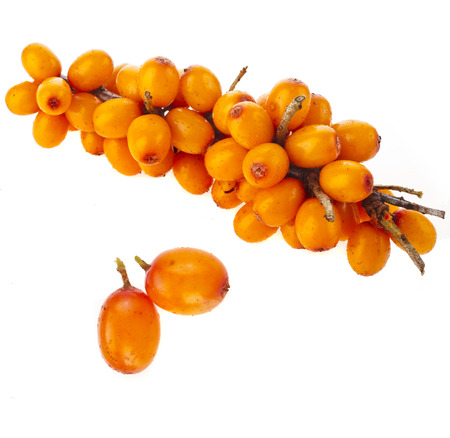 sallow: ripen sea buckthorn berries close up isolated on white background