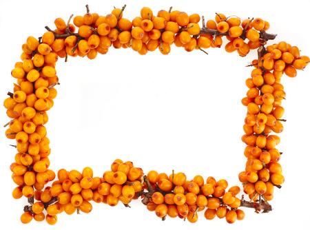 argousier: cadre supérieur de branche d'oranger baies d'argousier fraîches sur fond blanc isolé