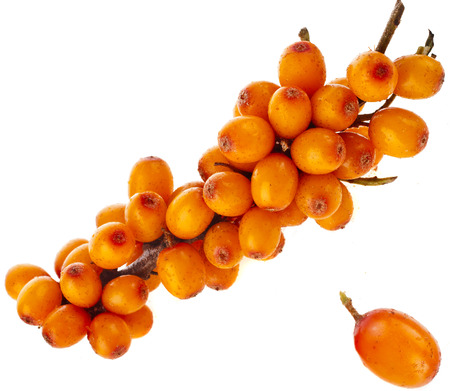 buckthorn: ripen sea buckthorn berries close up isolated on white background