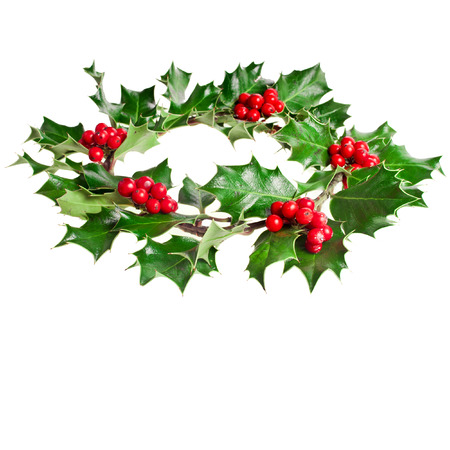 ilex aquifolium holly: Christmas decoration wreath of natural leaves and berries holly ilex plant isolated on white background