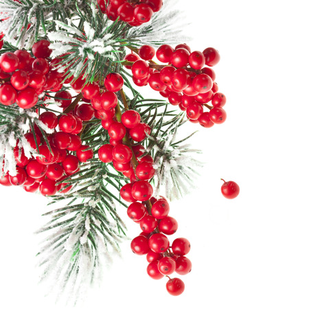 fir twig: Christmas fir twig with red berries card with copy space isolated on white