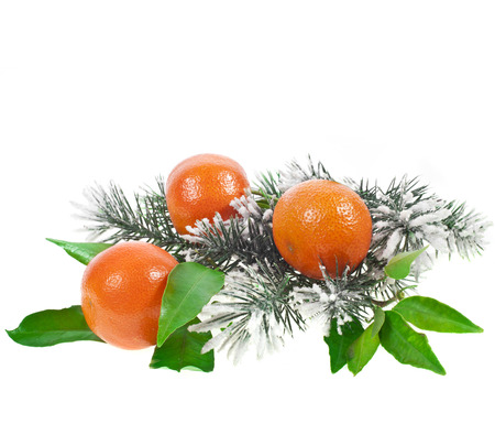 fir twig: Christmas fir twig with orange tangerine fruits isolated on a white background