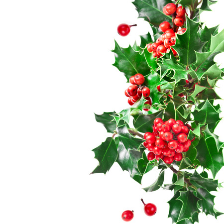 christmas holly: Christmas border with holly plant isolated on white background