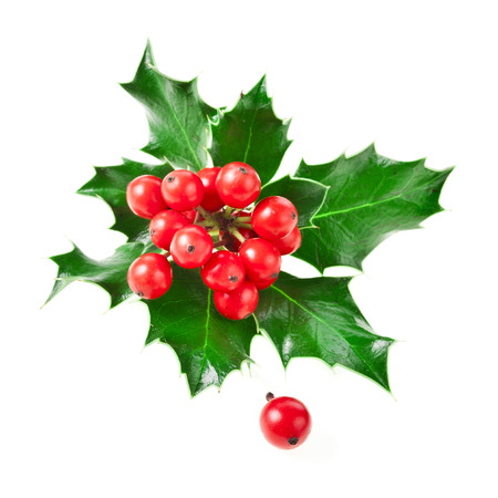 白い背景に分離された欧州ホリー モチノキ クリスマス装飾 写真素材