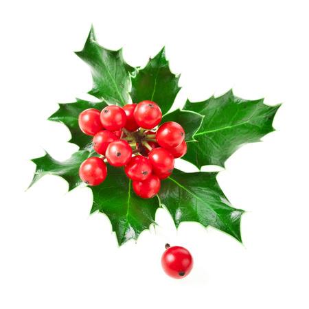christmas holly: European holly ilex christmas decoration isolated on white background