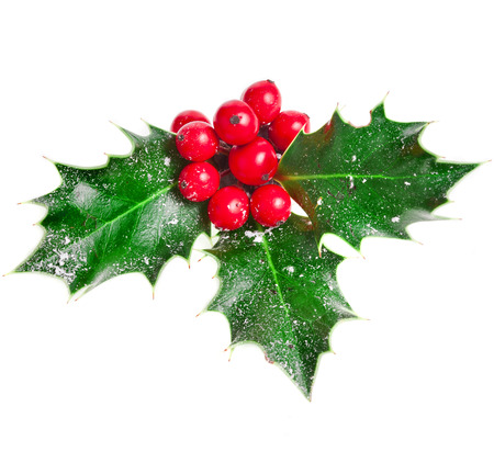 greeting christmas: Holly Christmas decoration. Clipping path included.