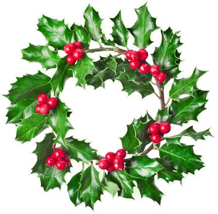 ilex aquifolium holly: Christmas decoration wreath of fresh berries and leaves holly tree isolated on white background