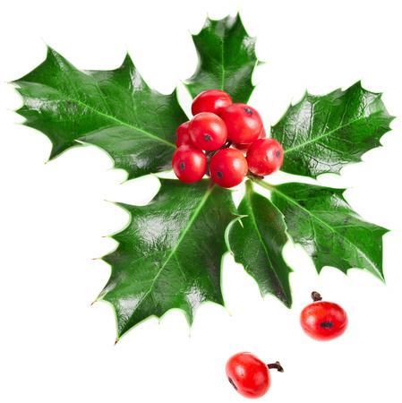 Europäische Stechpalme Ilex Weihnachtsdekoration isoliert auf weißem Hintergrund