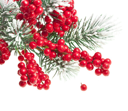 Christmas fir twig with red berries card with copy space isolated on white photo