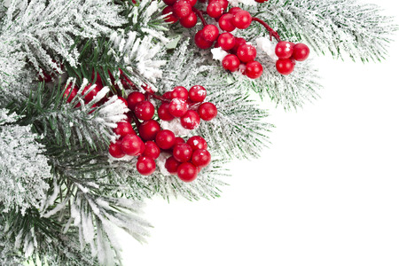 Christmas fir decoration with red berries, corner border, isolated on white