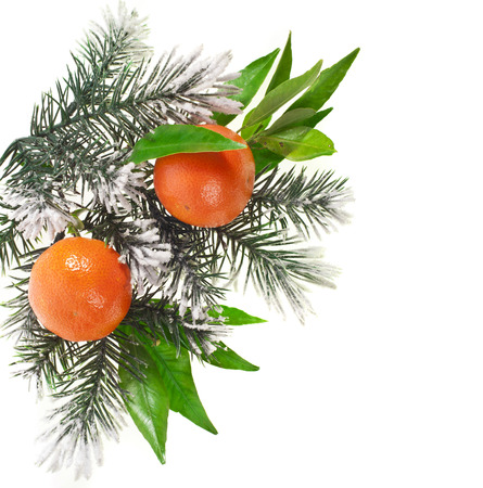 fir twig: orange tangerine fruits with fir twig isolated on a white background Stock Photo
