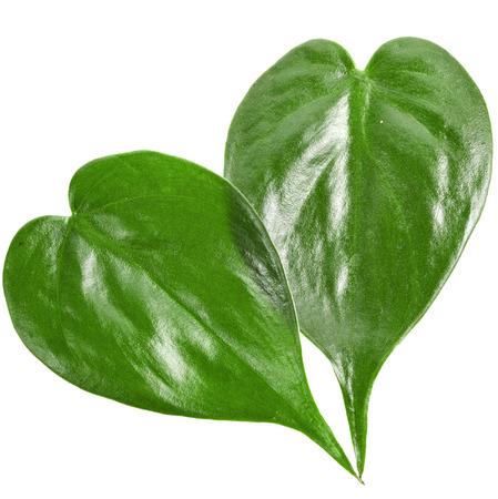 leaf shape: Two green leaf shape heart close up isolated on white background