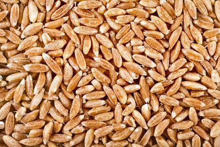 spelt: Spelt Grains Close up top view surface texture background Stock Photo