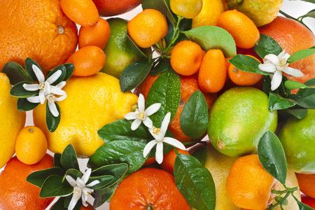 citrus tree: Beautiful citrus fruits mixed close up top view background