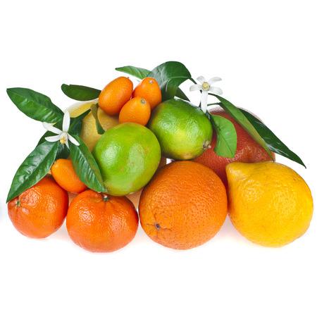 citrus: Beautiful citrus fruits of lemon, orange, grapefruit , lime, kumquat, isolated on white background Stock Photo