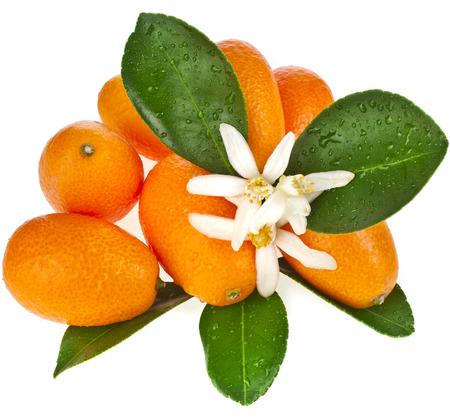 heap up: Pile heap of kumquat citrus fruit close up isolated on white background Stock Photo