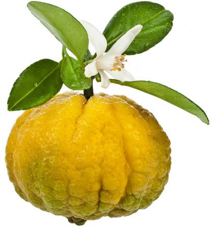 CITRICOS: Citrus Dulce Limón, una fruta cerca aisladas sobre fondo blanco