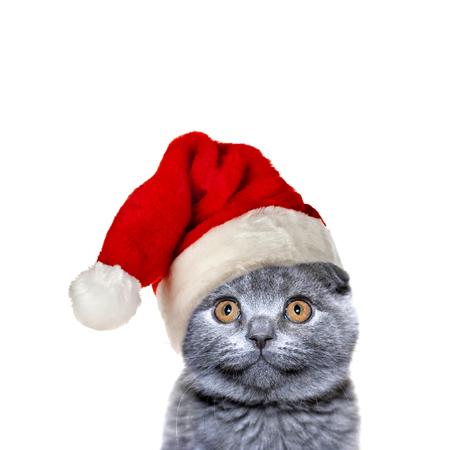 Christmas cat in red Santa Claus cap Stockfoto