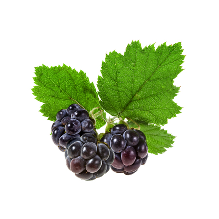 Blackberry with leaves close up