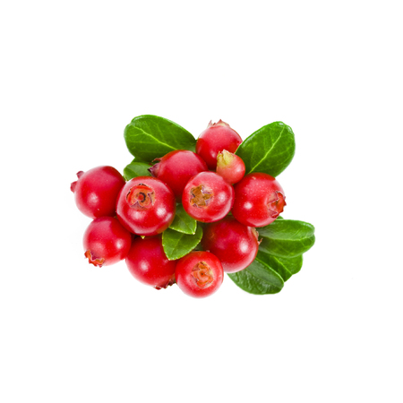 Cowberry Lingonberry isolated Stockfoto