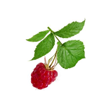 Raspberries bush macro shot Stockfoto