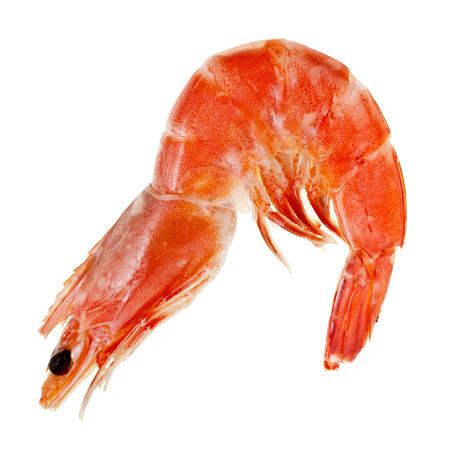 Prawn Shrimp isolated