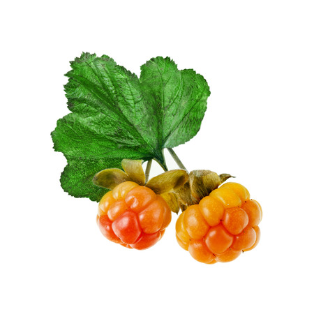 Cloudberry close up isolated
