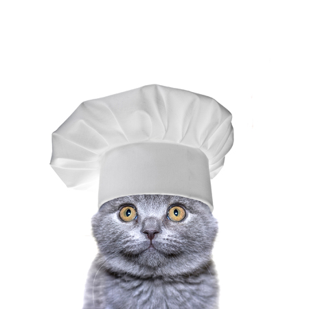Cute cat in a chef's hat isolated