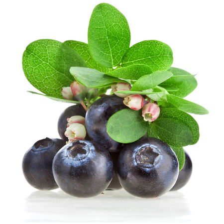 Fresh blueberries with flowers isolated Stockfoto