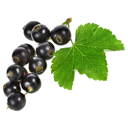 Black currant berries Isolated
