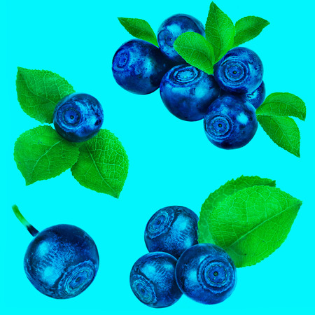 Blueberry collection set