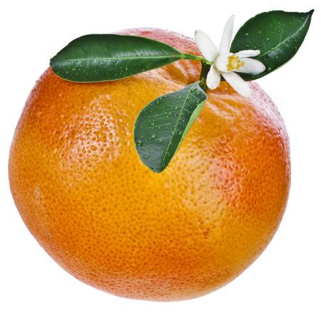 One grapefruit isolated Stockfoto