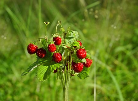 Bouquet Wild Strawberries