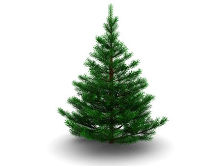 3d illustration of fir tree isolated over white background illustration