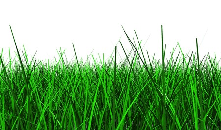 3d illustration of green grass isolated on white background Stock Illustration - 6895093