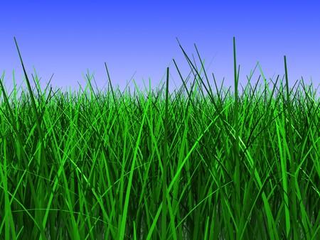 3d illustration of green grass closeup, over blue sky background Stock Illustration - 6895151