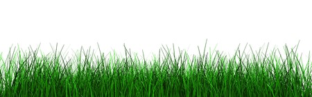 3d illustration of green grass foliage isolated over white background illustration