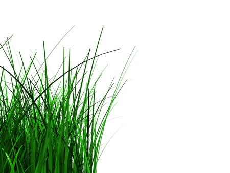 3d illustration of green grass foliage at left side of white background Stock Illustration - 7008269
