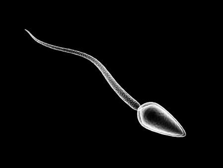 3D illustratie van één sperma cel geïsoleerd op zwarte achtergrond  Stockfoto