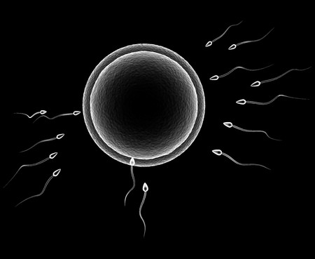 human sperm: 3d illustration of human egg and sperm cells over black background
