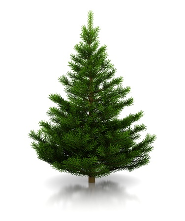 christmastree: 3d illustration of undecorated christmas tree over white background