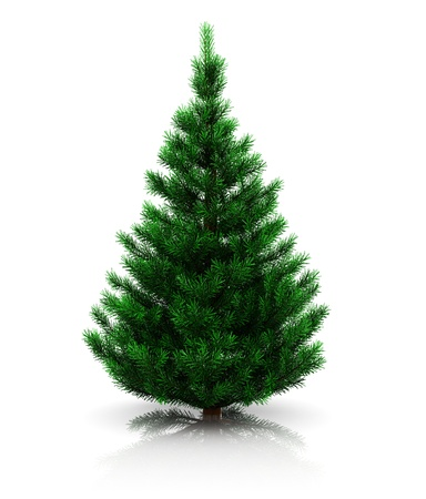 coniferous tree: 3d illustration of christmas tree undecorated over white background