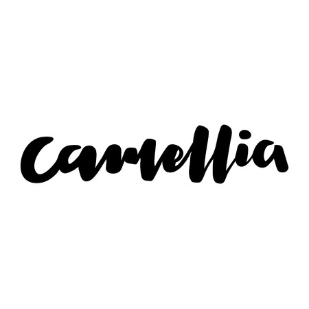 Camellia vector calligraphic text design. Illustration