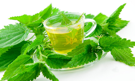 stinging  nettle: nettle tea with stinging nettle inside teacup, surrounded by bunches of leaf, white background, isolated, Stock Photo